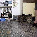 فیلم سینمایی Old Cats به کارگردانی Sebastián Silva و Pedro Peirano