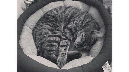 واکنشها به سوگواری برای مرگ یک گربه!!!
