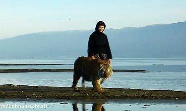 اولین آنونس فیلم مایا ببر مازندران
